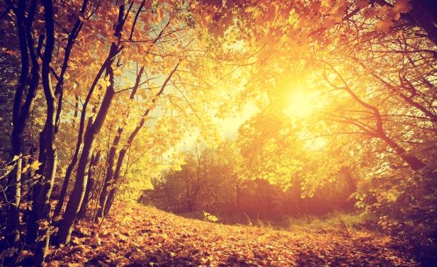 bosque arboles