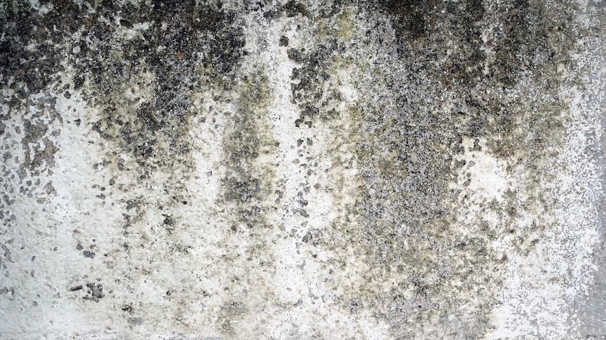 quitar humedades en la pared